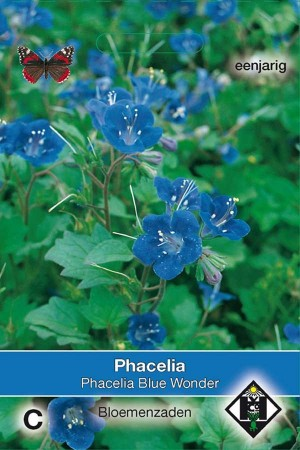 Bijenvoer (Phacelia) Blue Wonder