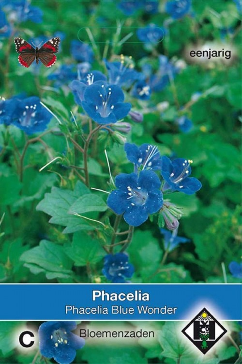 Blue Wonder Phacelia - Bijenvoer zaden