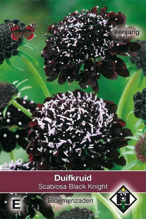 Duifkruid (Scabious) Black Knight
