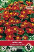 Favorite Red - African Marigold Tagetes seeds