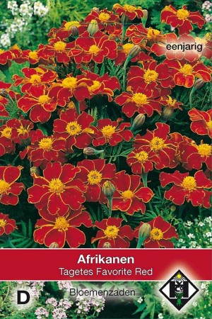 Marigold (Tagetes) Favorite Red