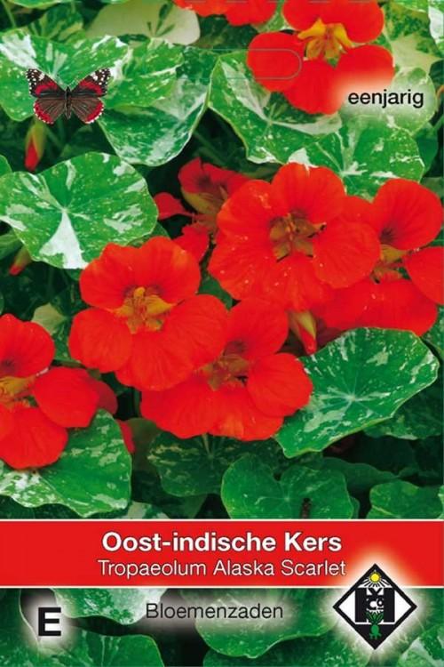 Alaska Scarlet Tropaeolum Oost-Indische kers zaden