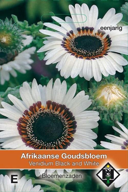 Marigold (Calendula) Black and White