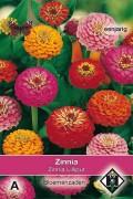 Lilliput pumila Zinnia seeds