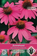 Coneflower Echinacea purpurea seeds