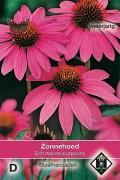 Zonnehoed Echinacea purpurea zaden