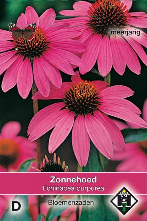 Purpurea - Echinacea