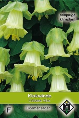 Klokwinde (Cobaea Scandens) Alba