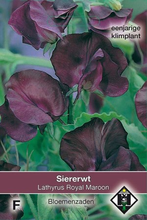 Sweet Peas (Lathyrus) Royal Maroon