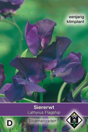 Flagship Sweet pea Lathyrus seeds