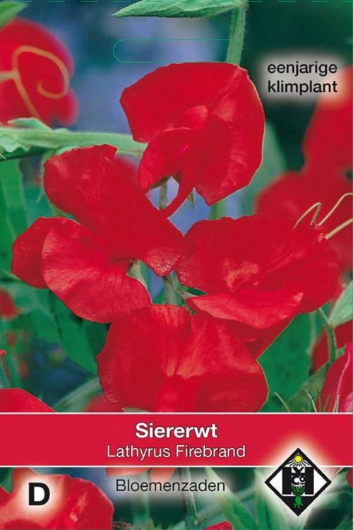 Firebrand Sweet pea Lathyrus seeds