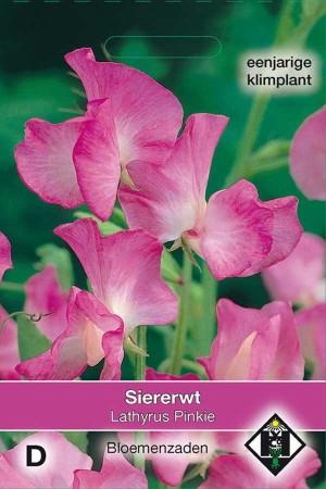 Reuk- of siererwt (Lathyrus) Pinkie