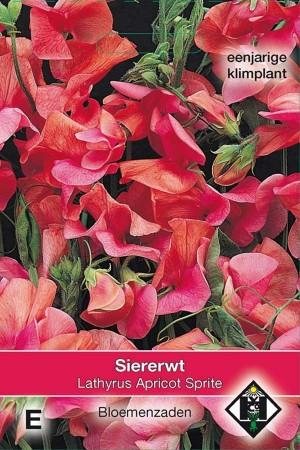 Reuk- of siererwt (Lathyrus) Apricot Sprite