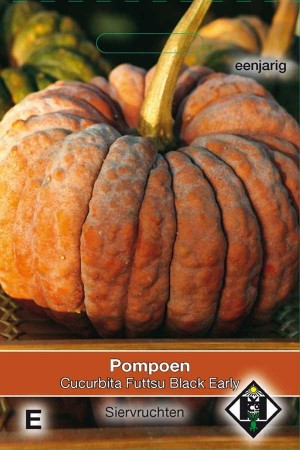 Pompoen - Kalebas Futtsu Black Early - Cucurbita moschata