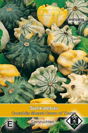 Pumpkin - Squash Shenot Crown of Thorns - Cucurbita pepo