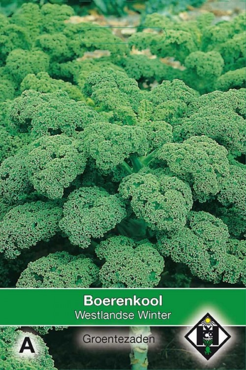 Westlandse Winter - Boerenkool