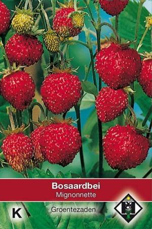 Aardbeien Mignonnette Bosaardbei