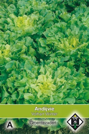 Endive Breedblad Volhart Winter