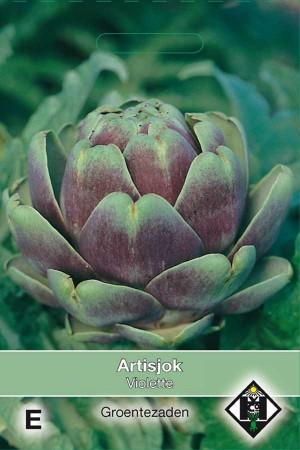Artichoke   Violette