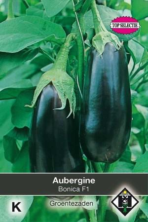 Bonica F1 - Eggplant