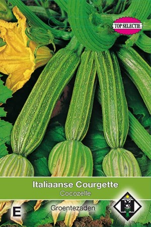 Summer Squash Cocozelle