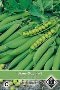 Kelvedon Wonder - Green Pea