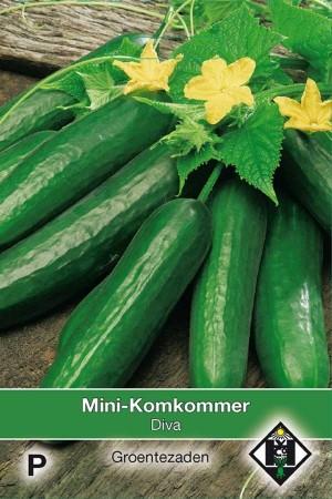Snack cucumber - mini-cucumber Diva - Mini Komkommer