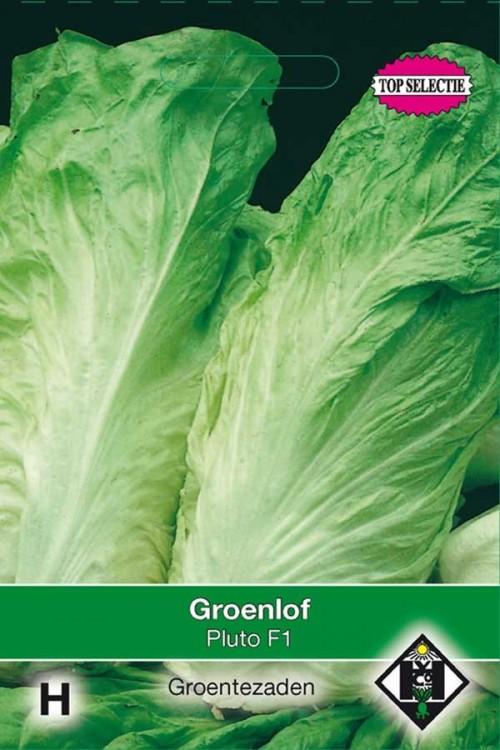 Jupiter F1 - Green Chicory