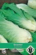 Zuckerhut - Green Chicory