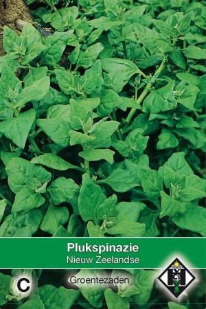 Spinach Nieuw-Zeelandse Plukspinazie