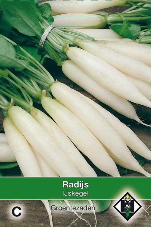 IJskegel - Radish