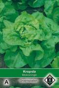 Butterhead Lettuce Meikoningin - Kropsla