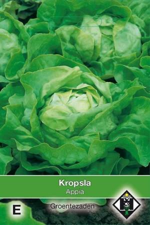 Butterhead Lettuce Appia - Kropsla