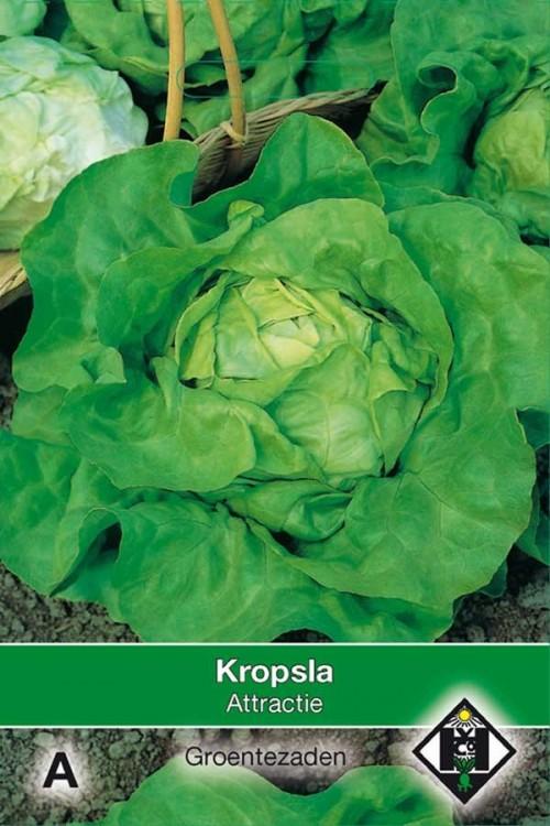 Attractie - Lettuce