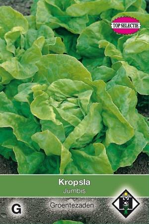 Butterhead Lettuce Jumbis / Mercurion - Kropsla