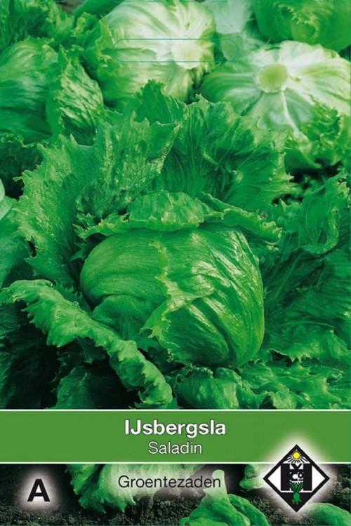 Saladin - Lettuce