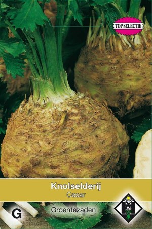 Cesar - Turnip-rooted Celery
