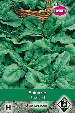 Spinach Umbria F1