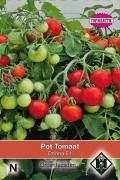 Donna F1 - Tomato