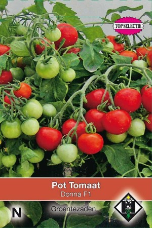 Bush Tomatoes Donna F1