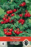 Ruby Red - Pot Tomaat