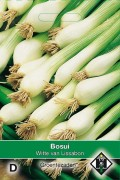 Witte van Lissabon bunching onion seeds