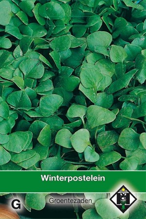 Purslane Winterpostelein