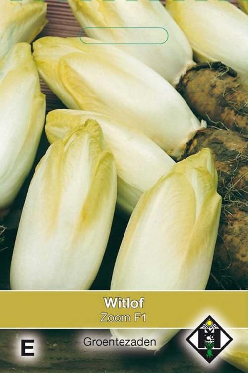 Zoom F1 - Witlof