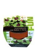 Mini Growing Gifts 4 leaf clover - FUN