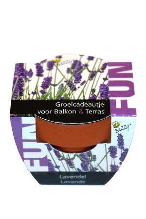 Groeikadootje Lavendel FUN