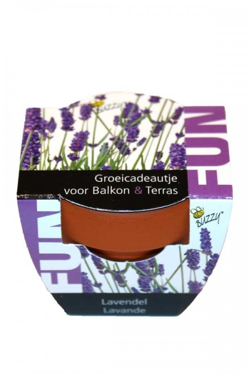 Mini Growing Gifts Lavender - FUN