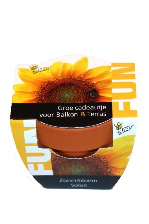 Mini Growing Gifts Sunflower - FUN