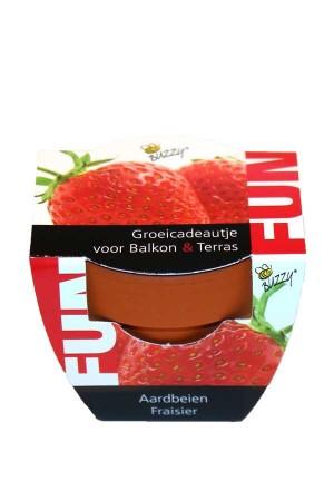 Mini Growing Gifts Strawberry - FUN