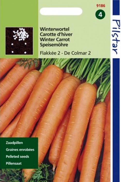 Winterwortel Flakkee 2 - Pilstar